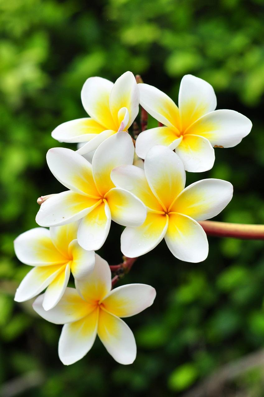 Ảnh hoa Chi Đại