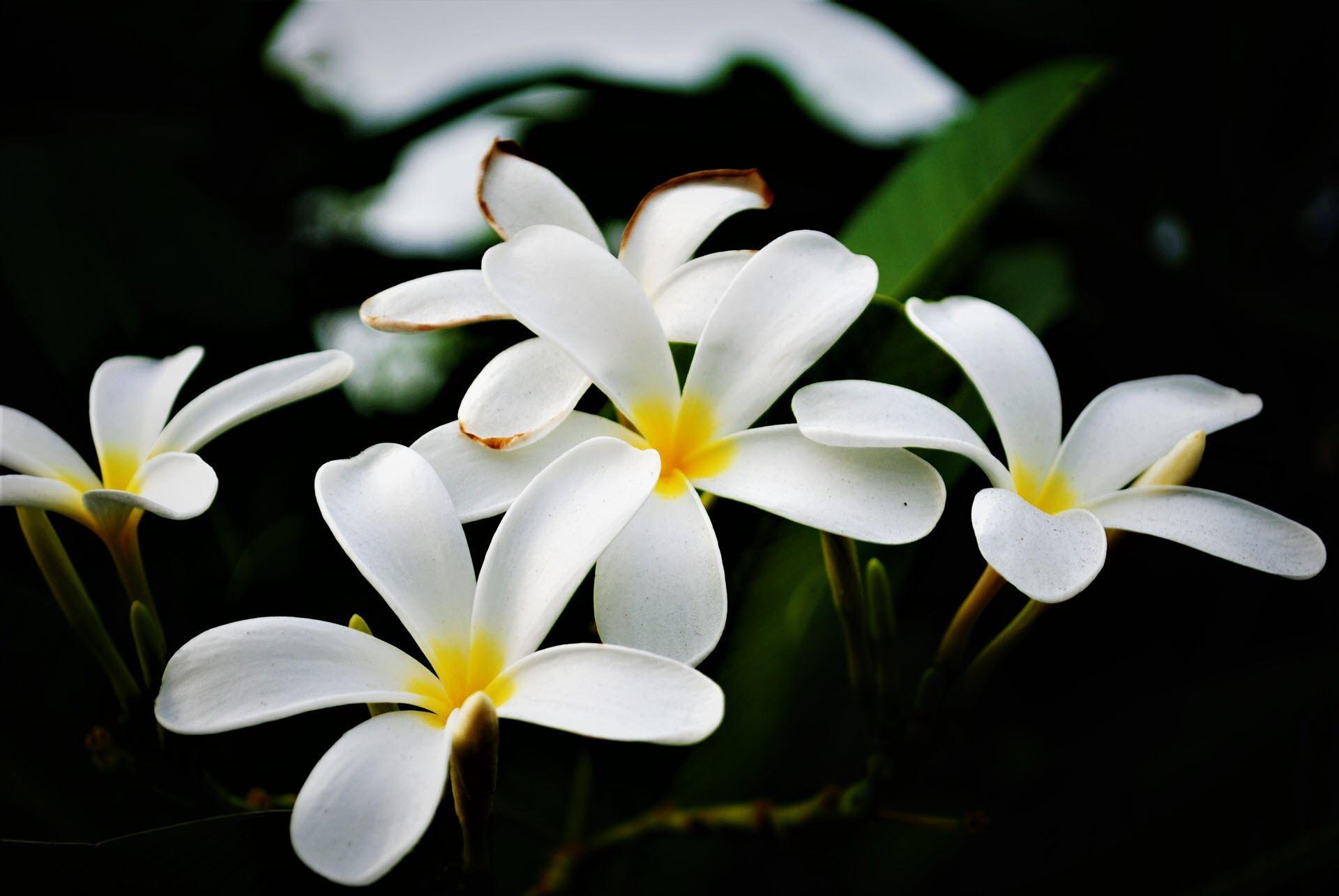 Ảnh hoa sứ đẹp