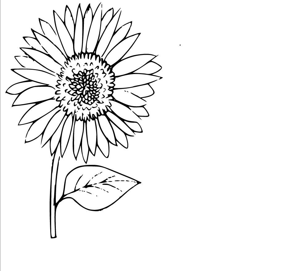 Ảnh tô màu hoa hướng dương cho bé