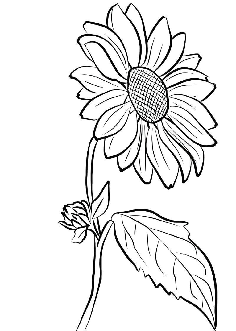 Ảnh tô màu hoa hướng dương