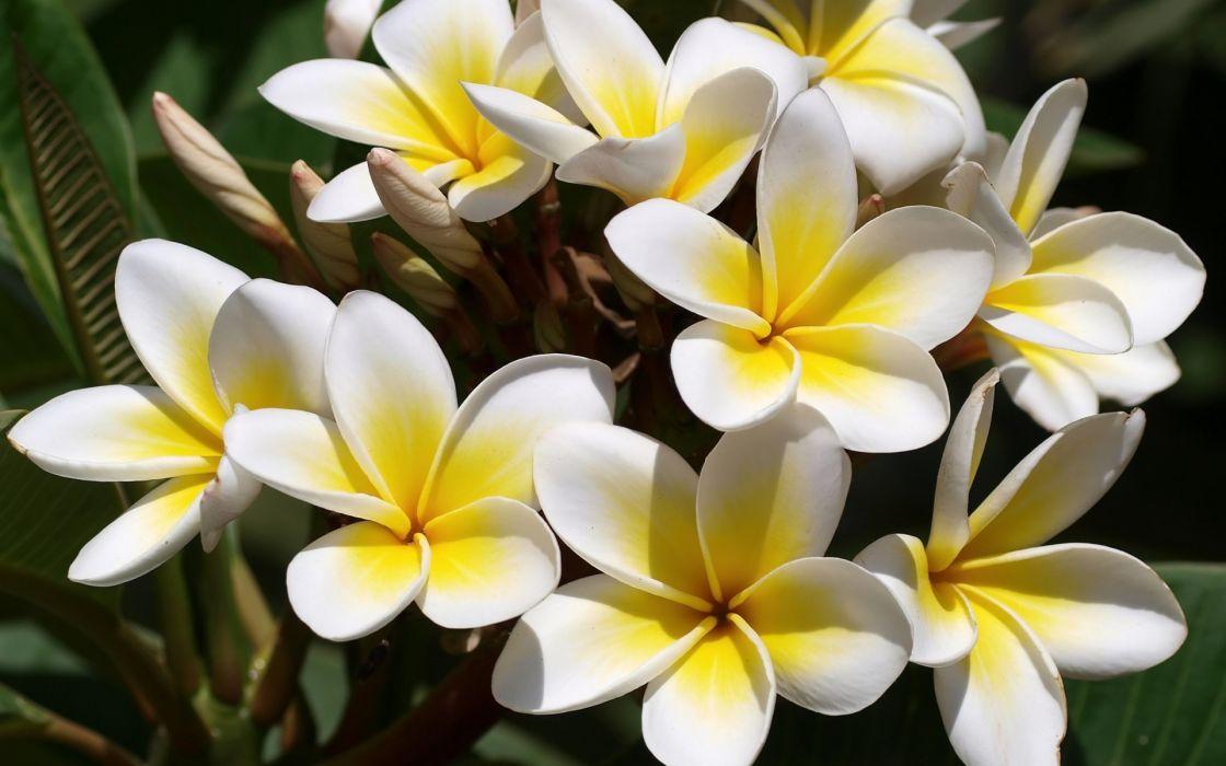 Hình ảnh bông hoa đại đẹp nhất