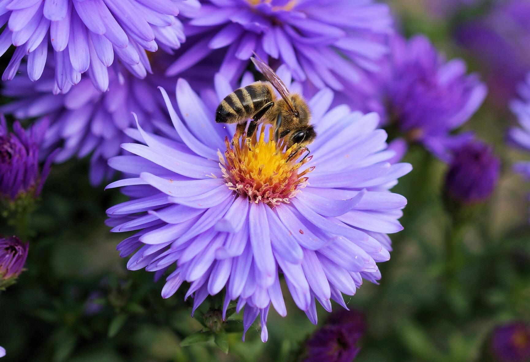 Hình ảnh con hoa hút mật