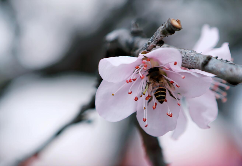 Hình ảnh con ong chăm chỉ