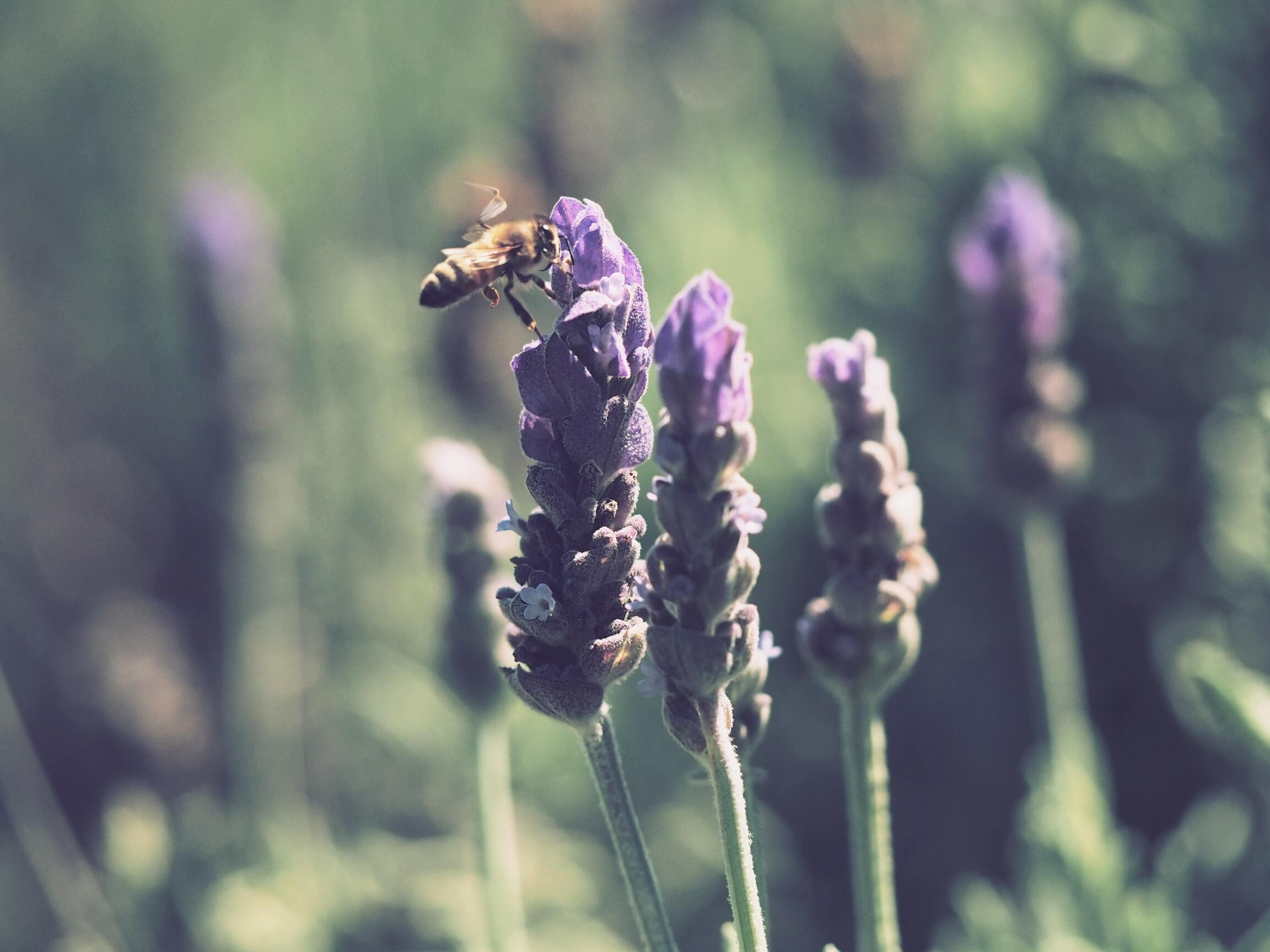 Hình ảnh con ong đẹp nhất