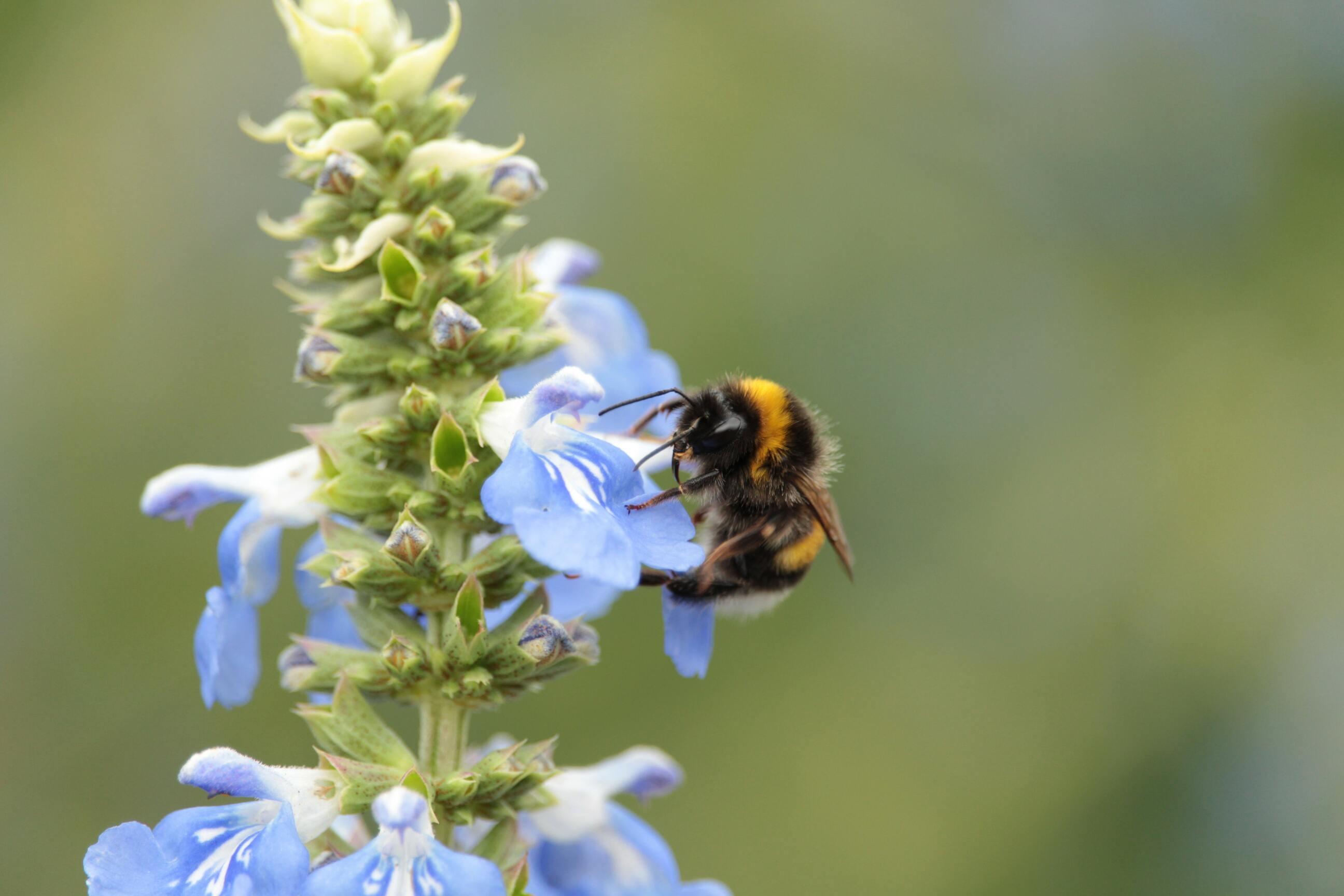 Hình ảnh con ong hút mật đẹp nhất