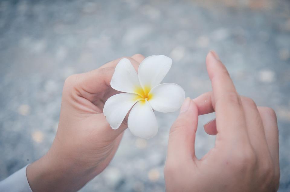 Hình ảnh hoa sứ đẹp nhất
