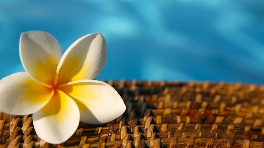 Hình ảnh hoa sứ