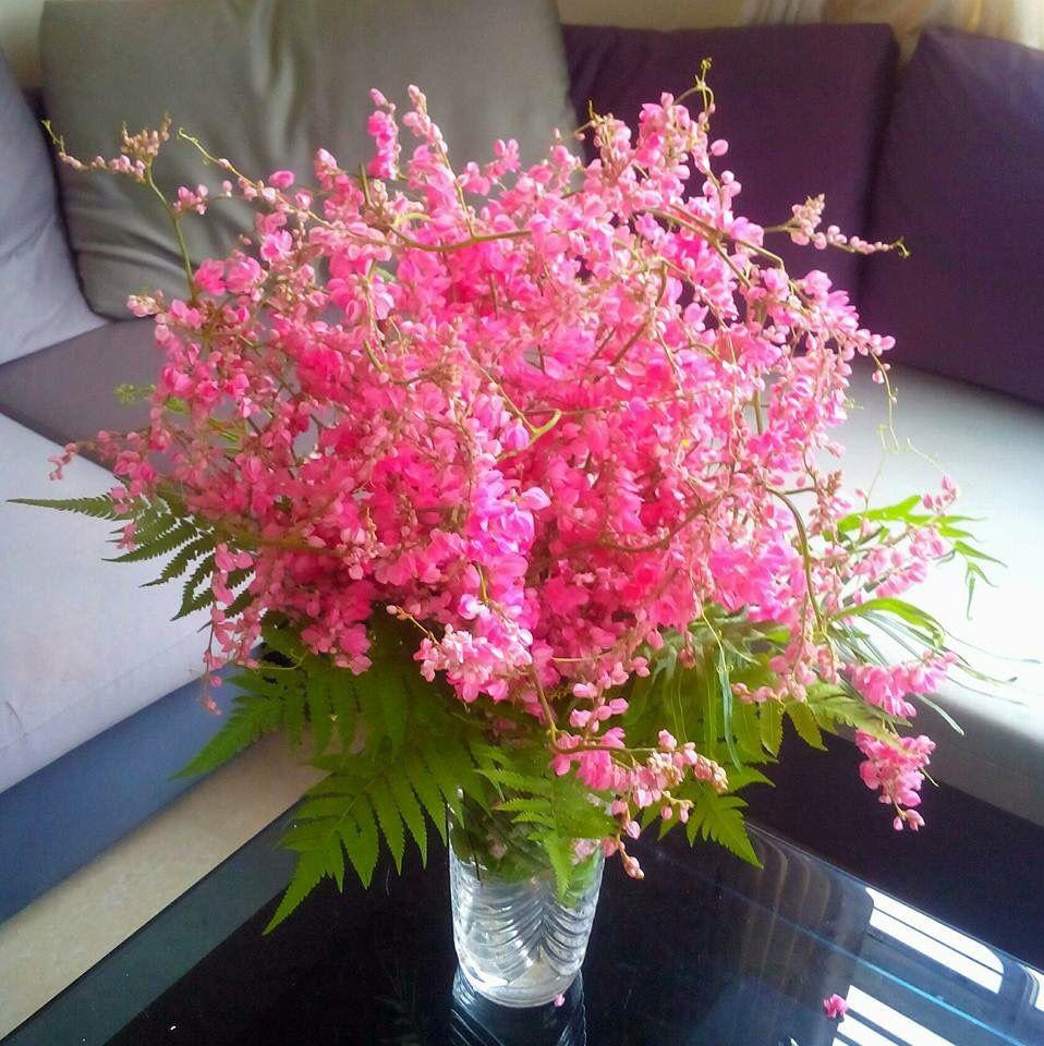 Hình ảnh lọ hoa tigon