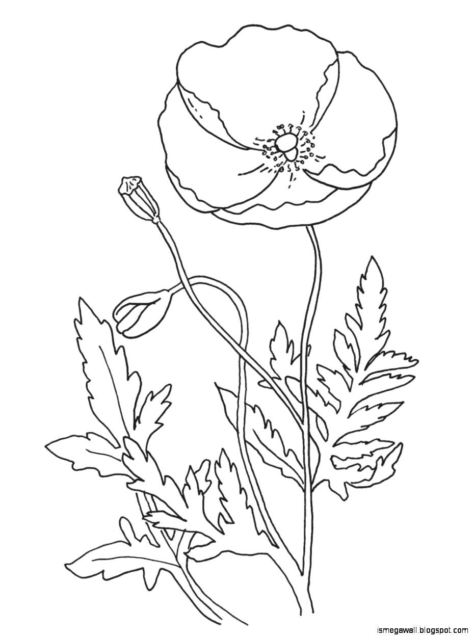 Tranh tô màu bông hoa cực đơn giản