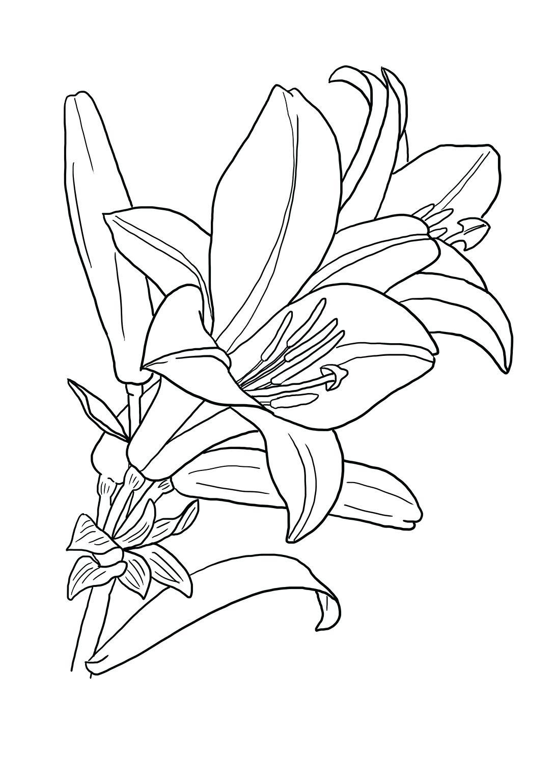 Tranh tô màu bông hoa dễ thương cho bé
