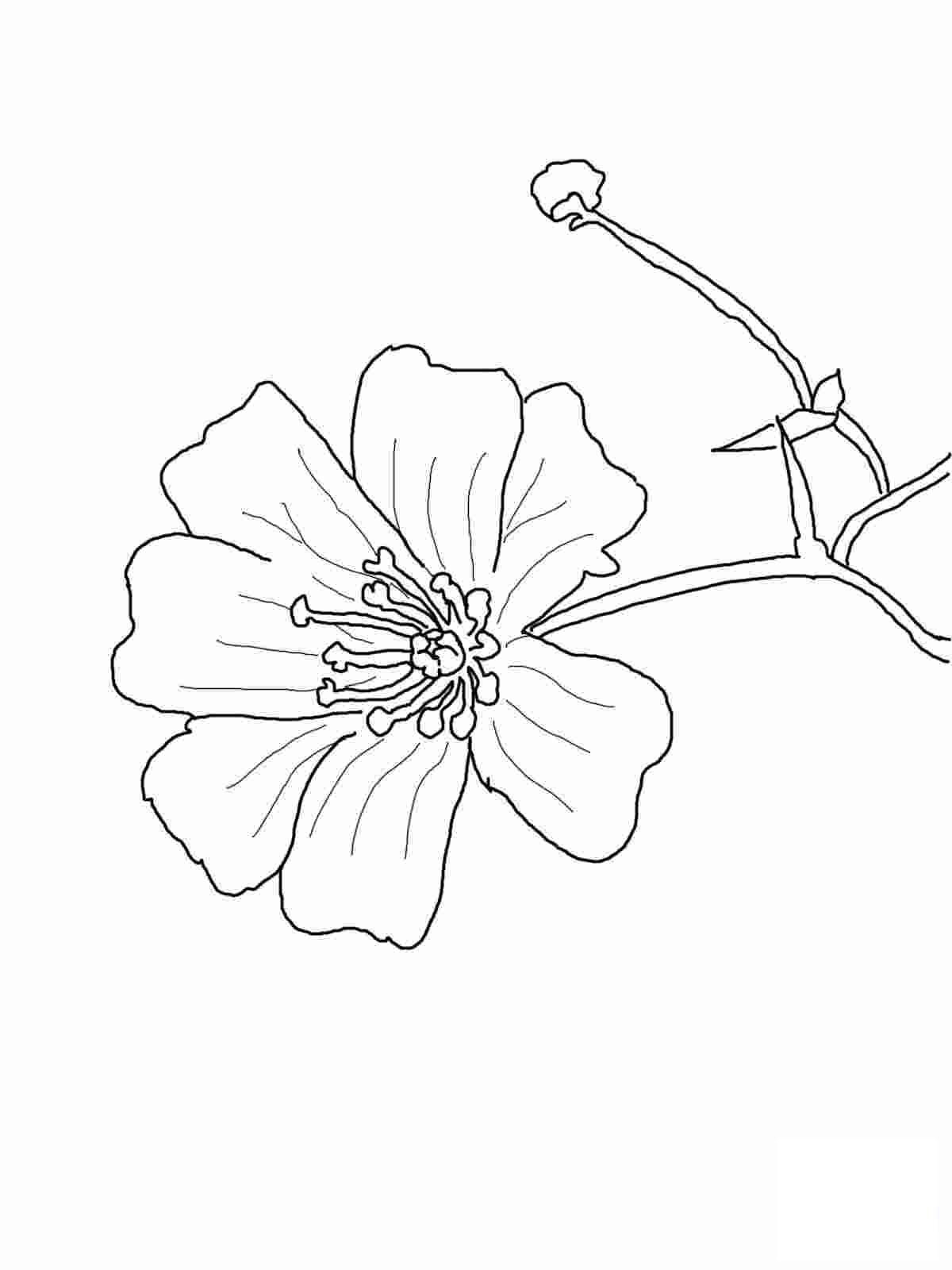 Tranh tô màu bông hoa dễ