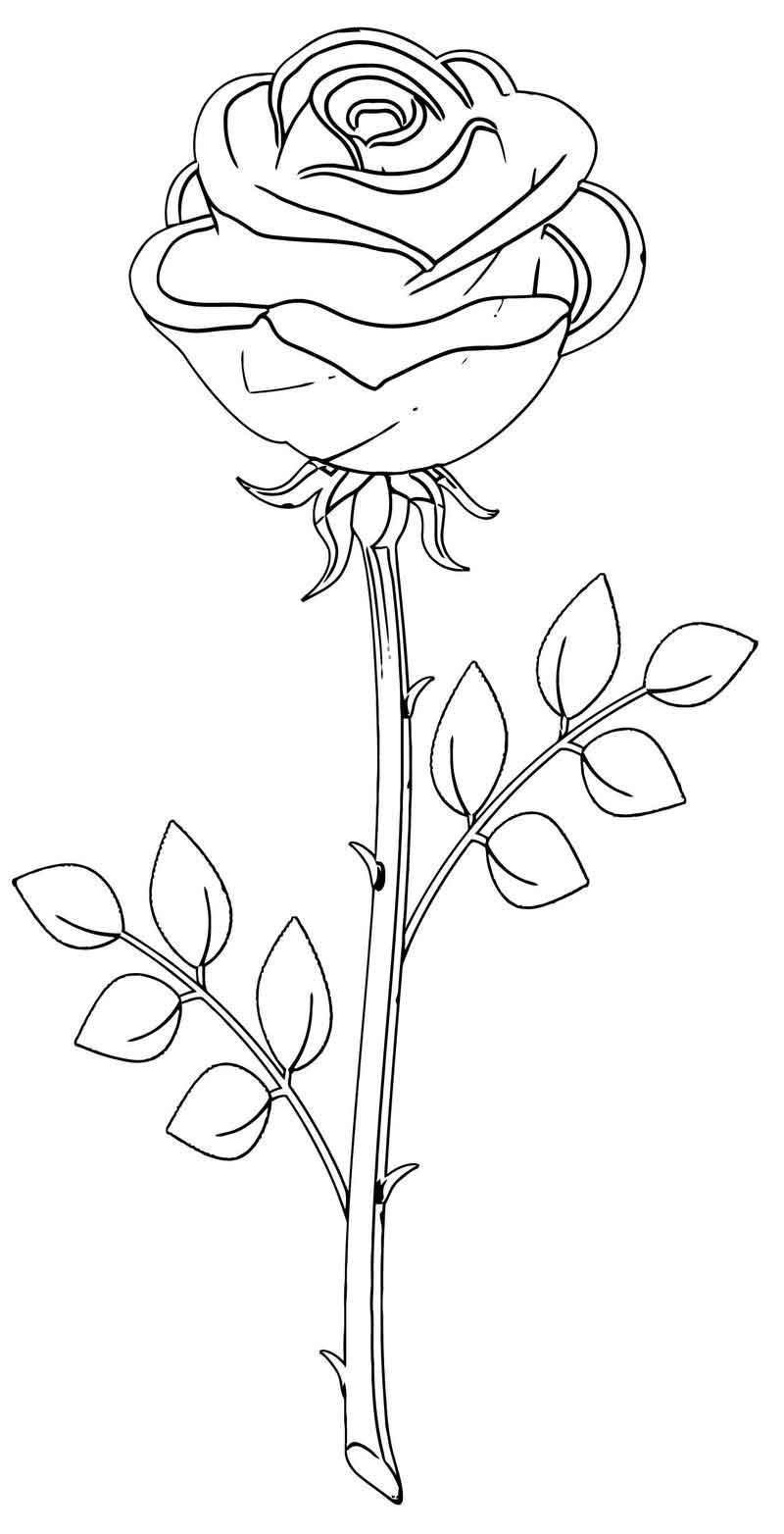 Tranh tô màu bông hoa đơn giản đẹp