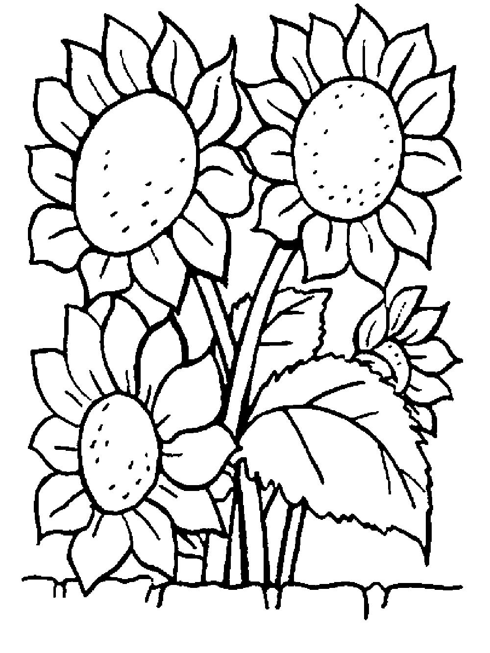 Tranh tô màu bông hoa hướng dương đẹp