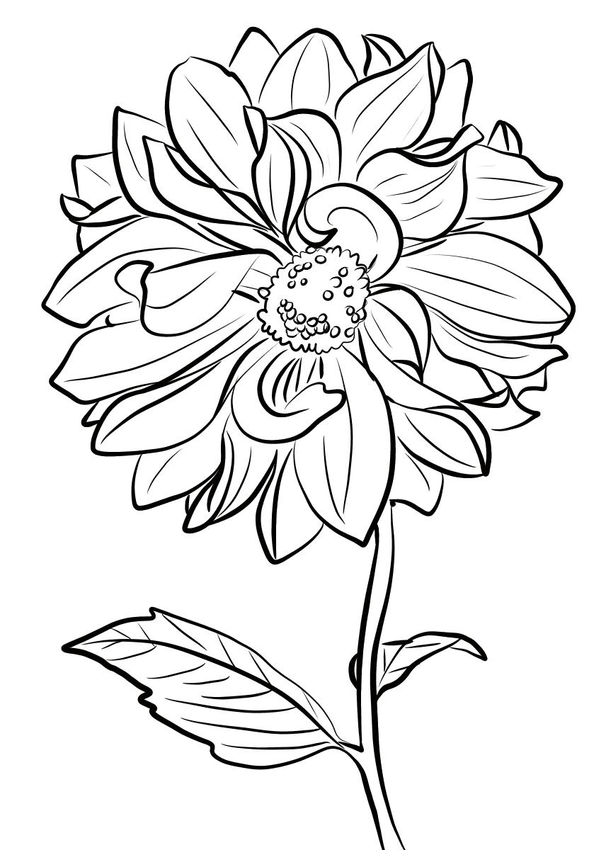 Tranh tô màu cành hoa