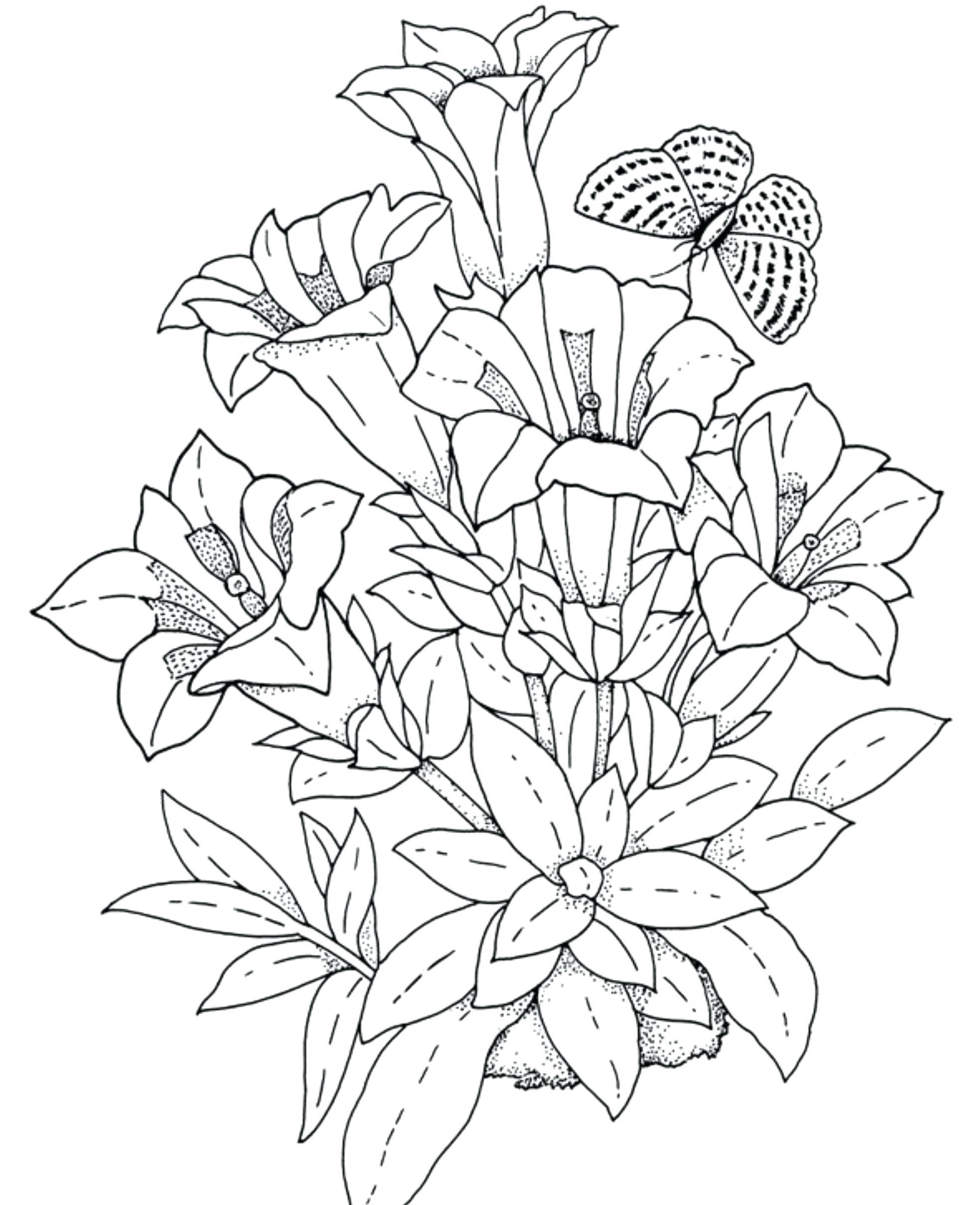 Tranh tô màu đóa hoa đơn giản