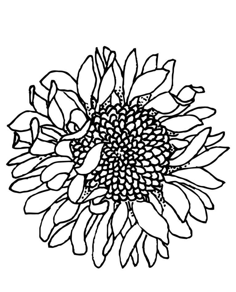 Tranh tô màu hoa hướng dương cực đẹp