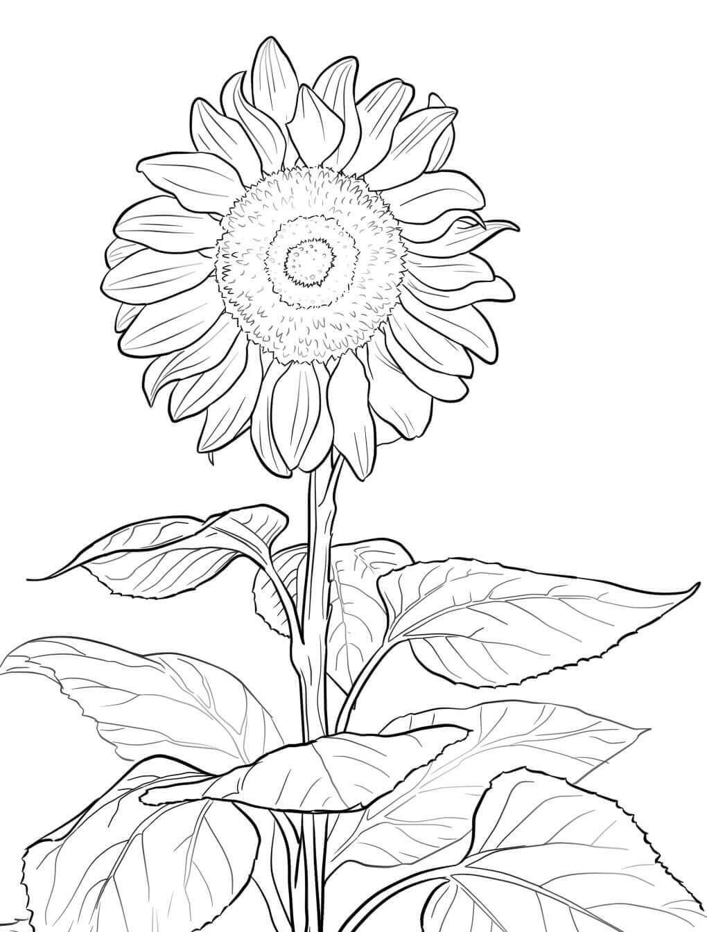 Tranh tô màu hoa hướng dương dễ thương