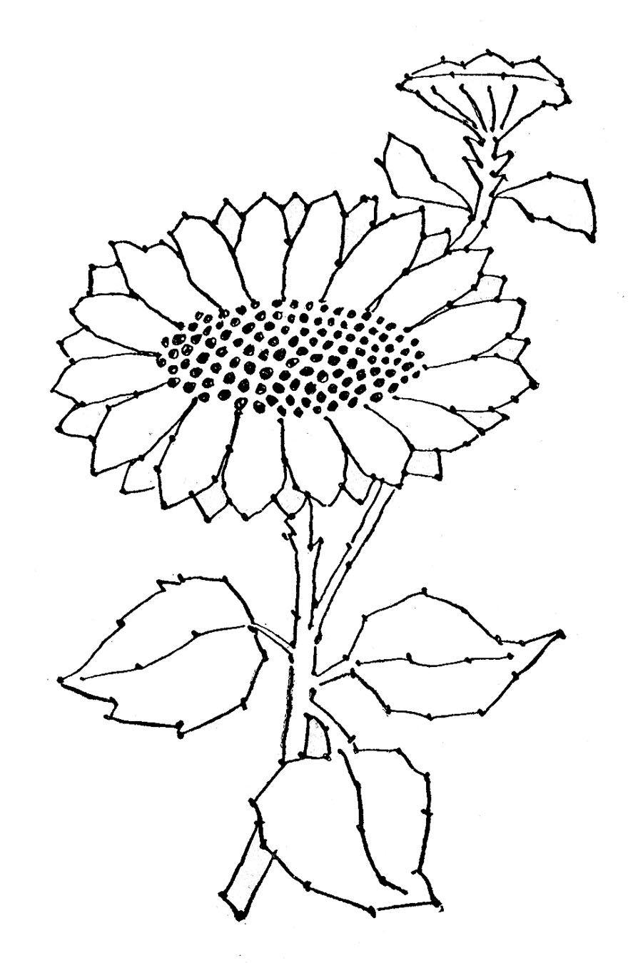 Tranh tô màu hoa hướng dương đẹp cho bé