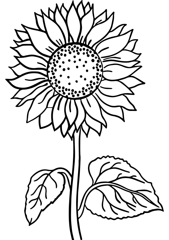 Tranh tô màu hoa hướng dương đơn giản cho bé