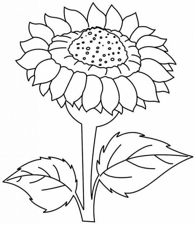 Tranh vẽ bông hoa hướng dương tô màu