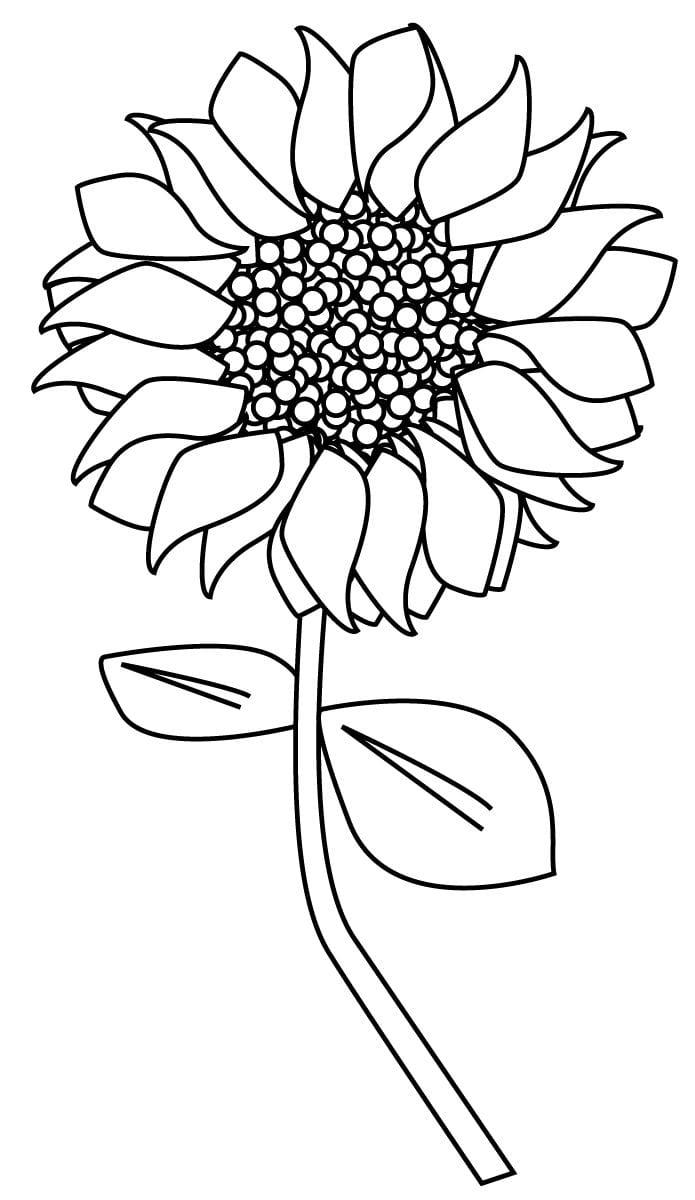 Tranh vẽ tô màu bông hoa hướng dương đẹp