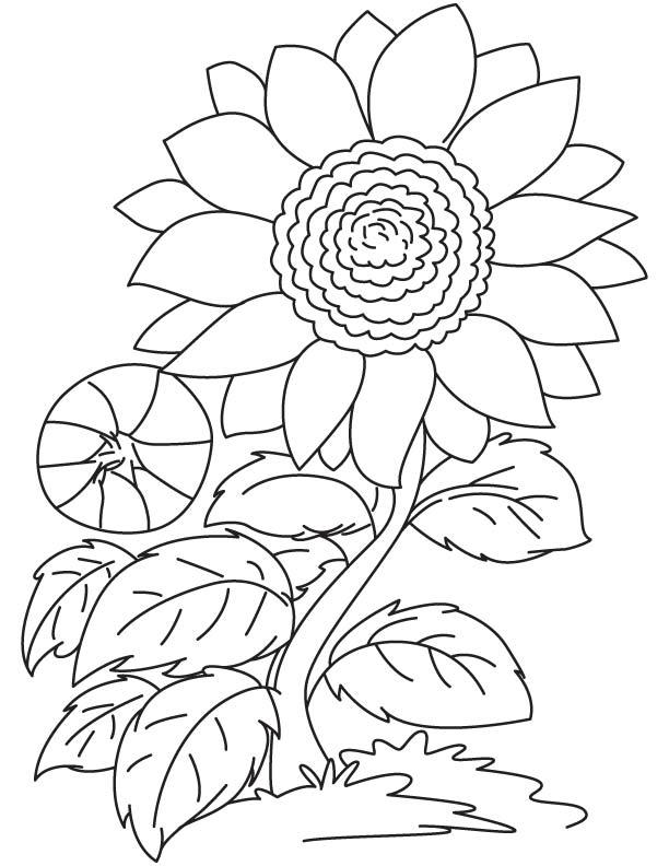 Tranh vẽ tô màu bông hoa hướng dương đơn giản