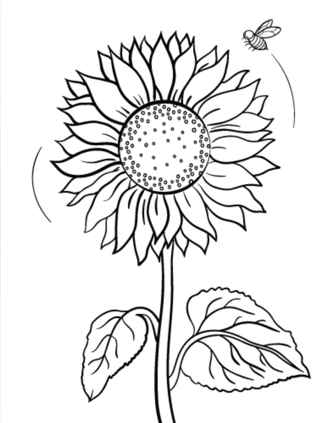 Tranh vẽ tô màu hoa hướng dương đẹp cho bé