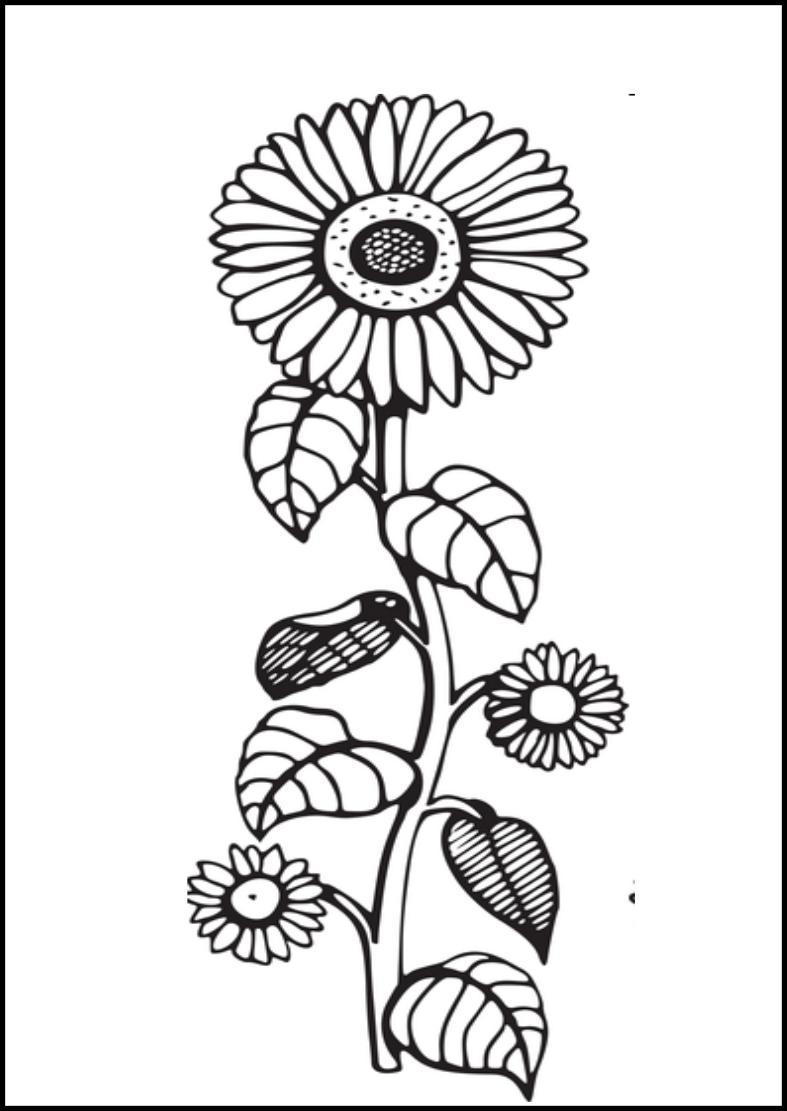Tranh vẽ tô màu hoa hướng dương đơn giản đẹp cho bé