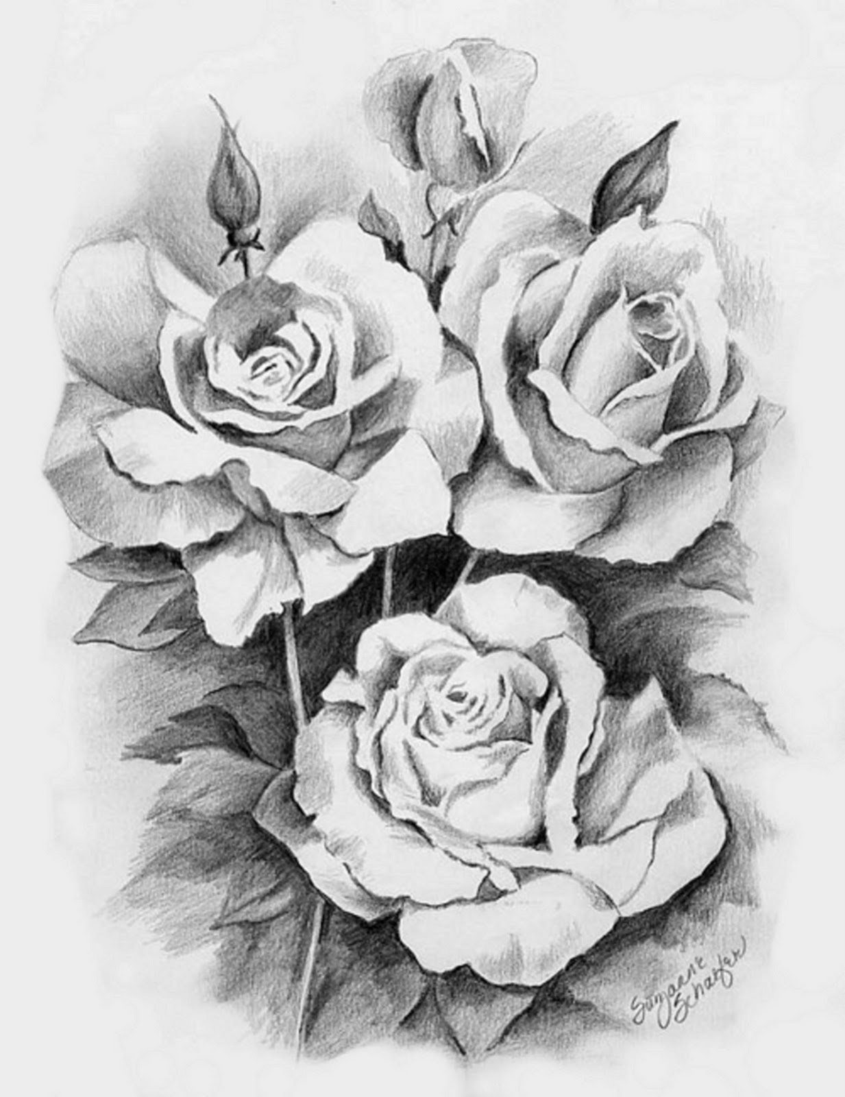 Ảnh bút chì hình hoa hồng
