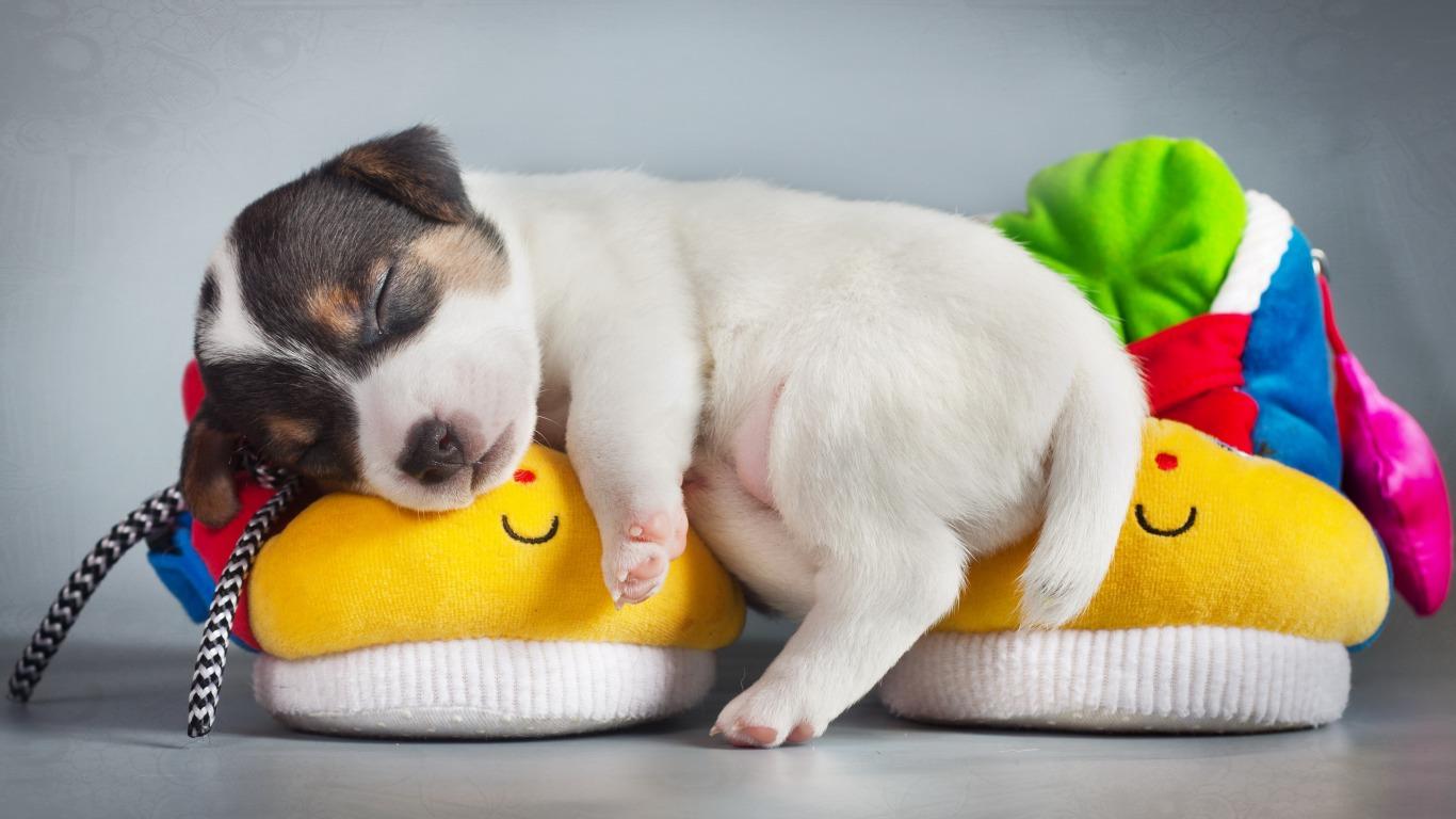 Ảnh con chó buồn ngủ dễ thương nhất