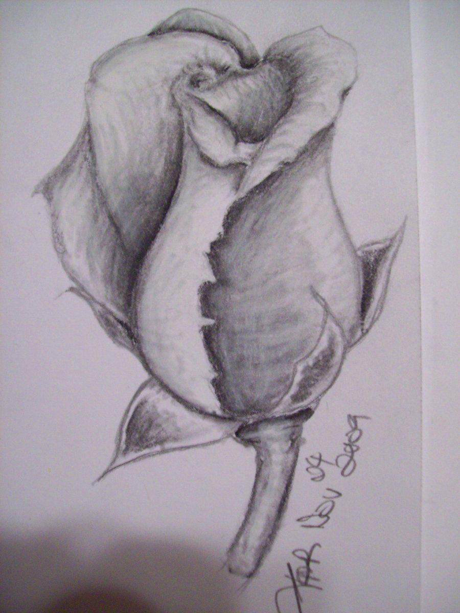 Ảnh đẹp nhất về hoa hồng vẽ bằng bút chì