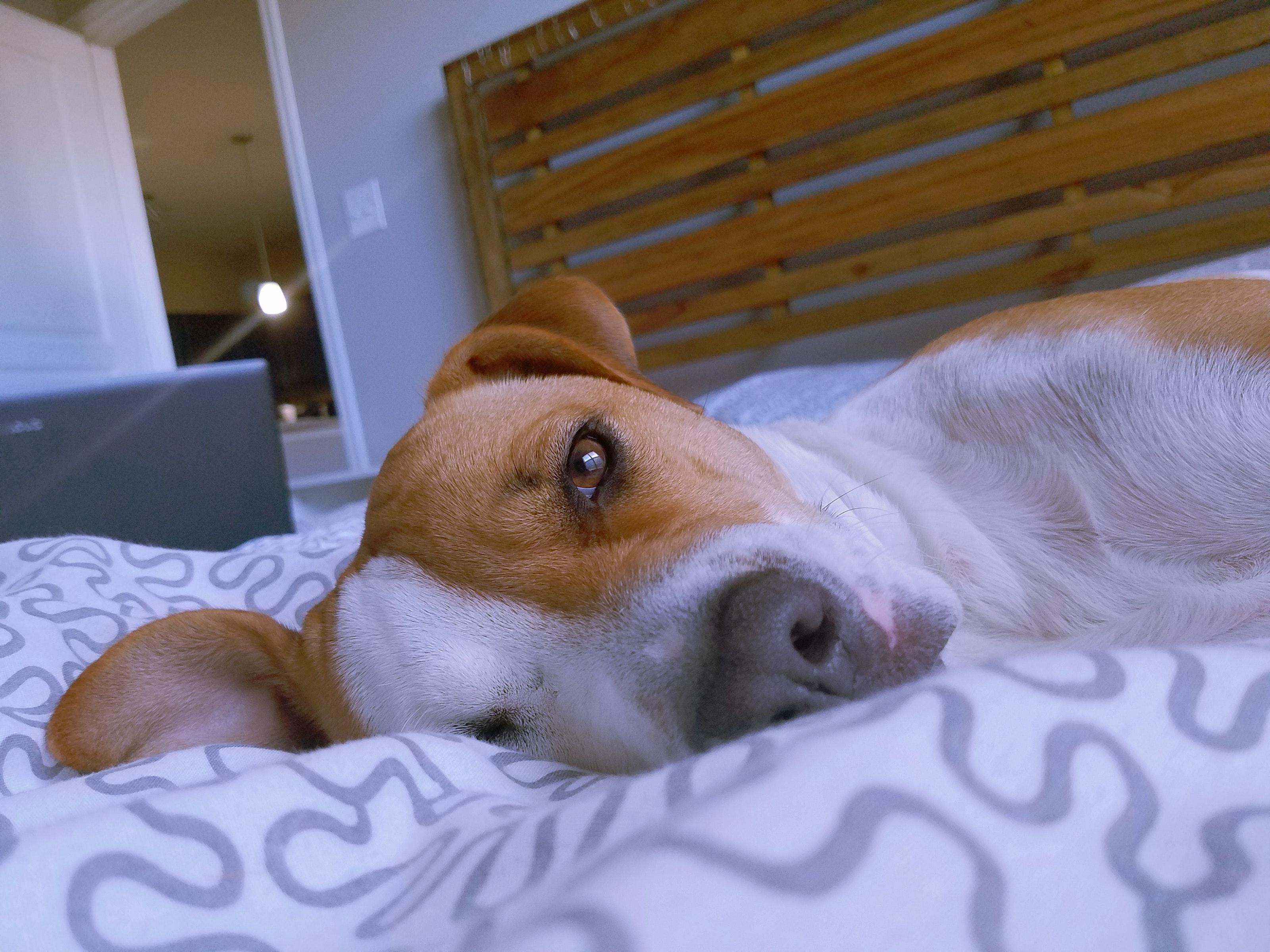 Ảnh động vật buồn ngủ