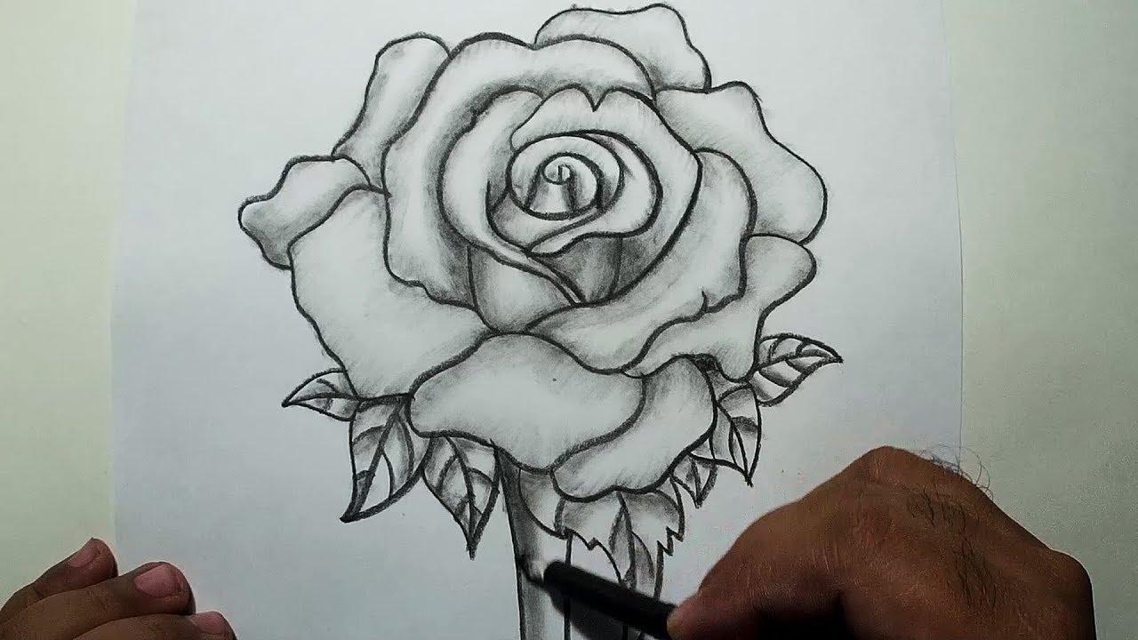 Ảnh hoa hồng đẹp vẽ bằng bút chì