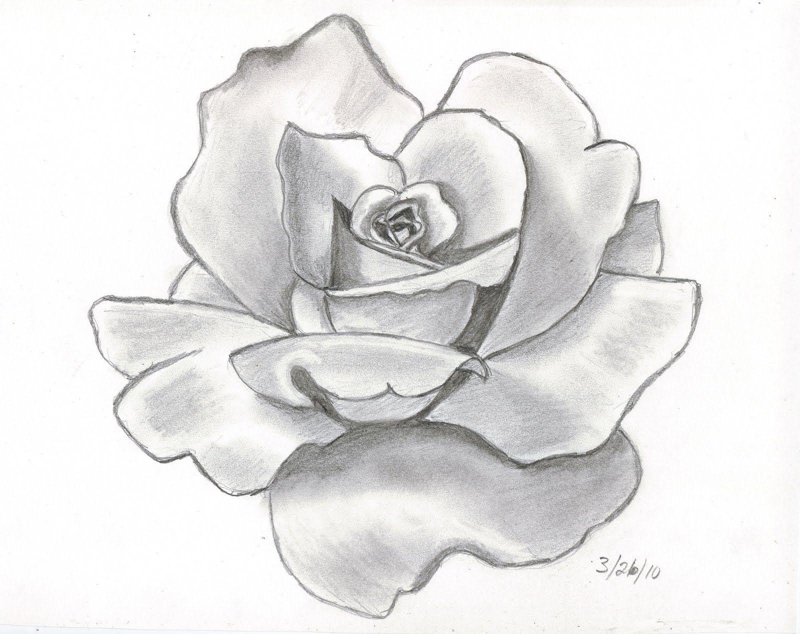 Ảnh hoa hồng được vẽ bằng bút chì đẹp nhất