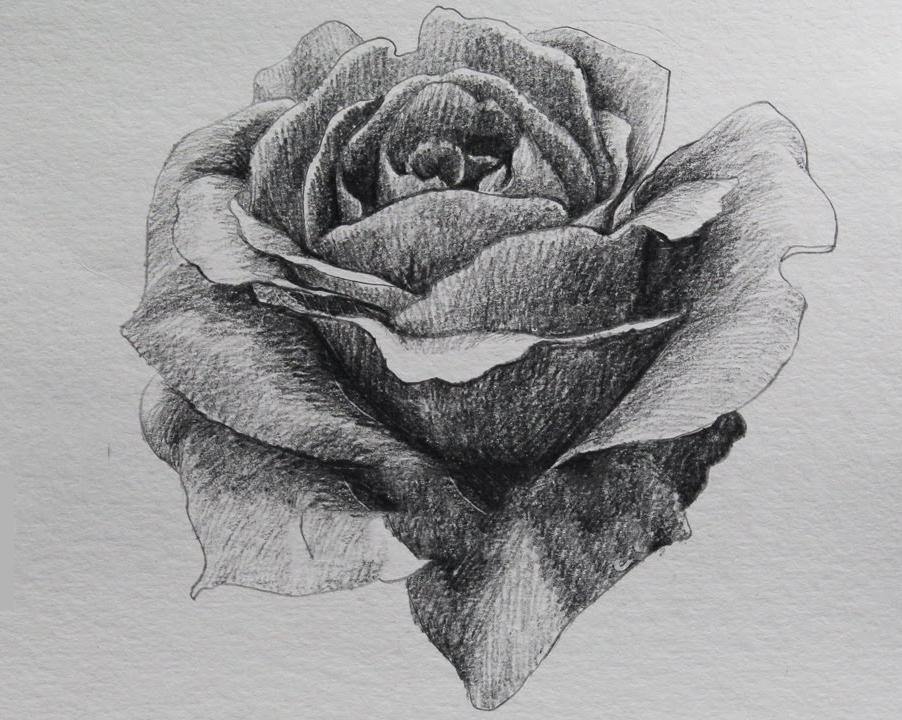 Ảnh hoa hồng vẽ bằng bút chì ấn tượng nhất