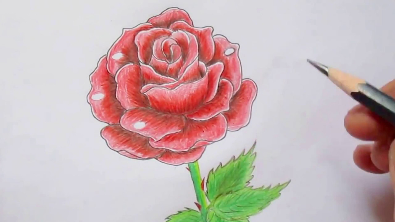 Ảnh hoa hồng vẽ bằng bút chì đẹp nhất