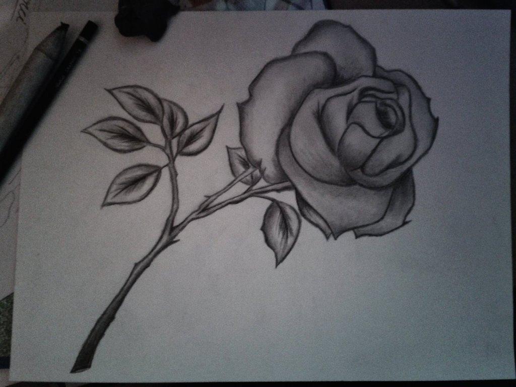 Ảnh vẽ hình hoa hồng bằng bút chì ấn tượng nhất