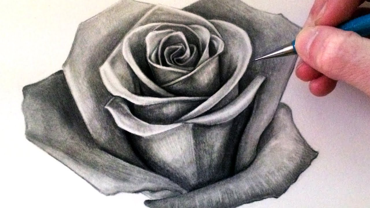 Ảnh vẽ hoa hồng bằng bút chì cực ấn tượng