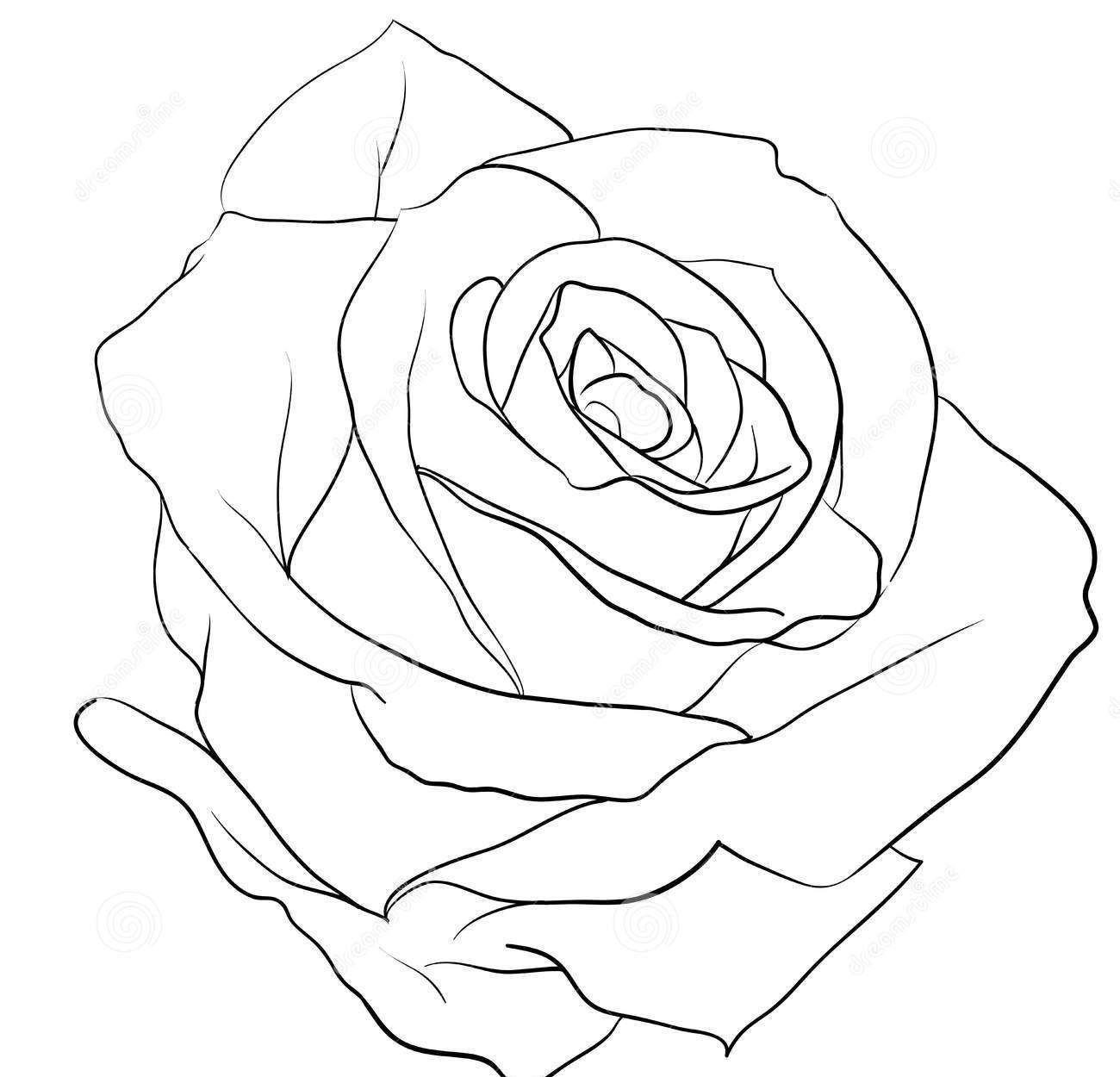 Ảnh vẽ hoa hồng bằng bút chì cực đẹp
