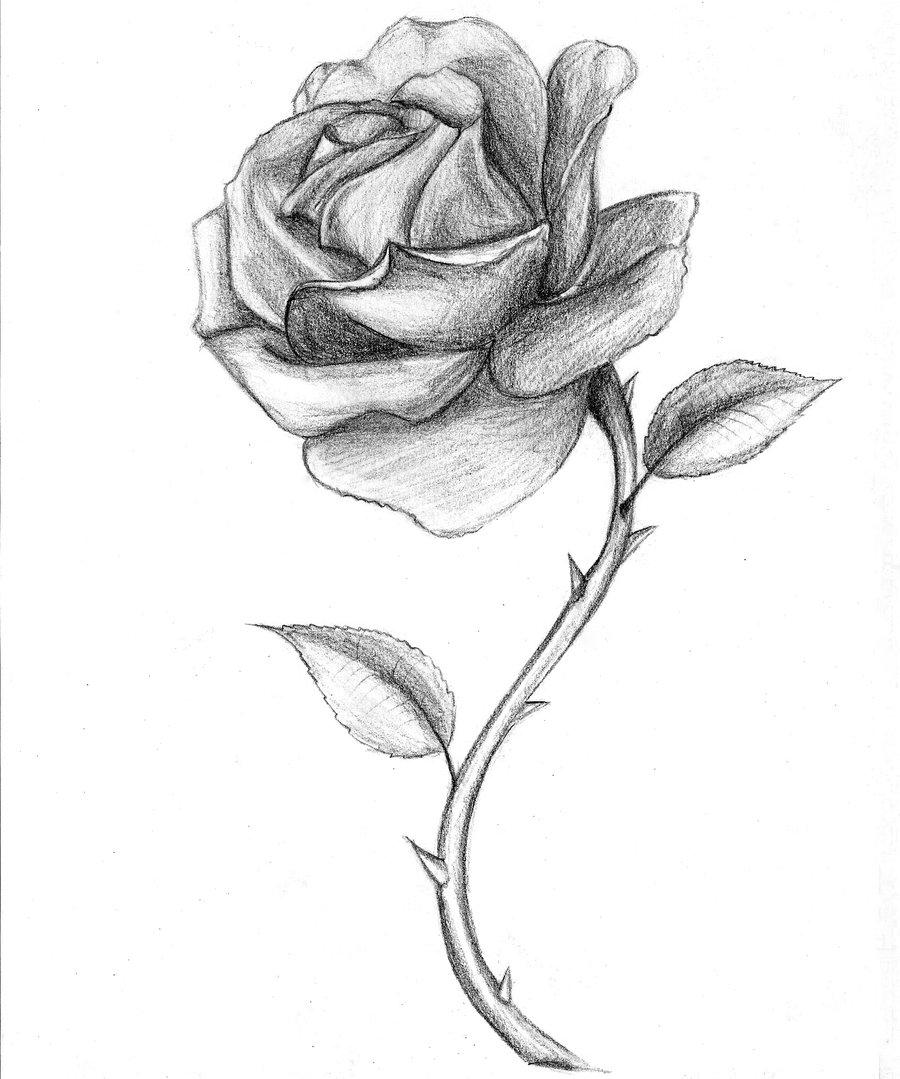 Ảnh vẽ hoa hồng bằng chì đẹp nhất