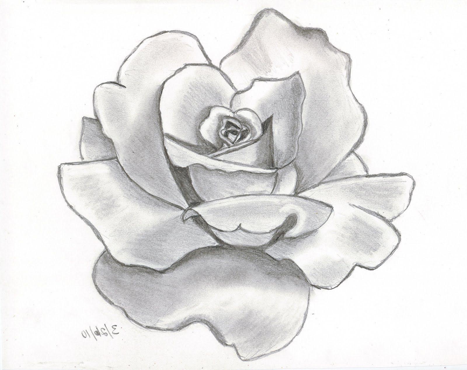 Ảnh vẽ hoa hồng nghệ thuật bằng bút chì