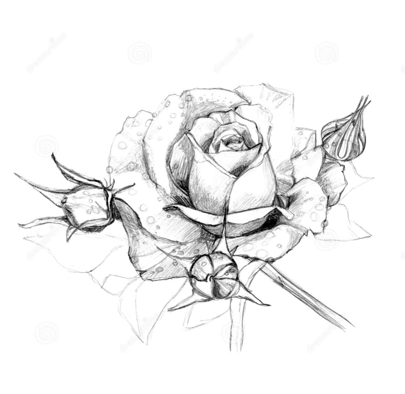 Ảnh vẽ họa tiết hoa hồng bằng bút chì ấn tượng nhất