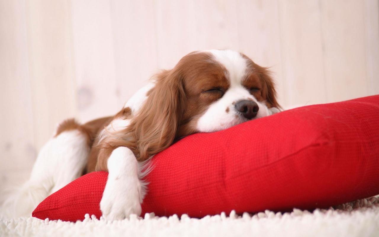 Hình ảnh buồn ngủ siêu dễ thương và cute