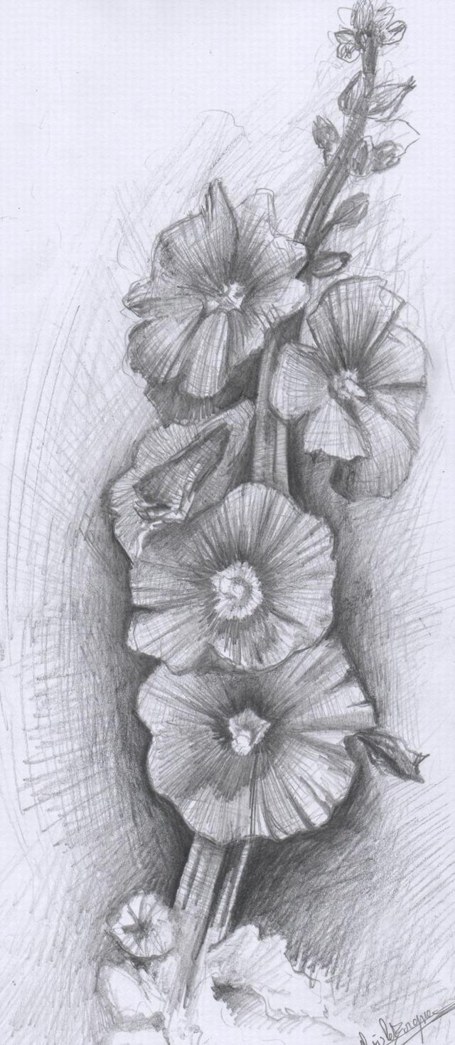 Hình ảnh hoa hồng vẽ bằng bút chì