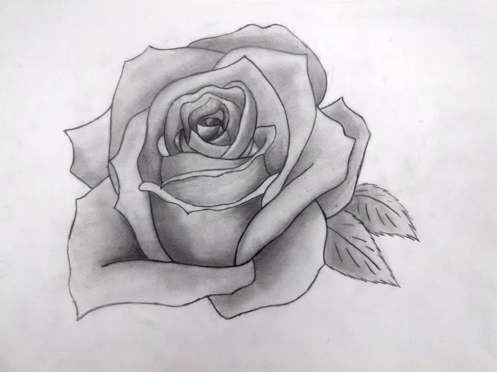 Hình ảnh tranh vẽ hoa hồng bằng bút chì đẹp nhất
