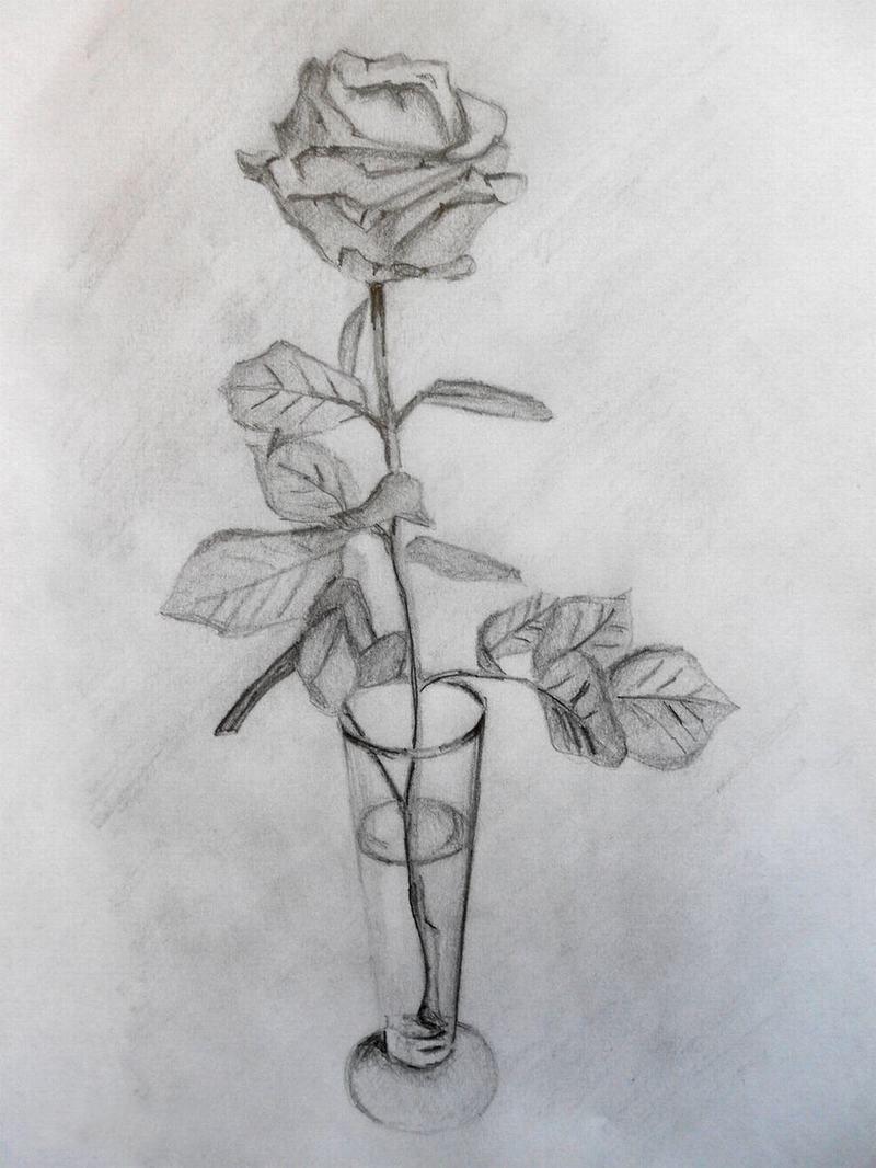 Hình ảnh vẽ hoa hồng bằng bút chì