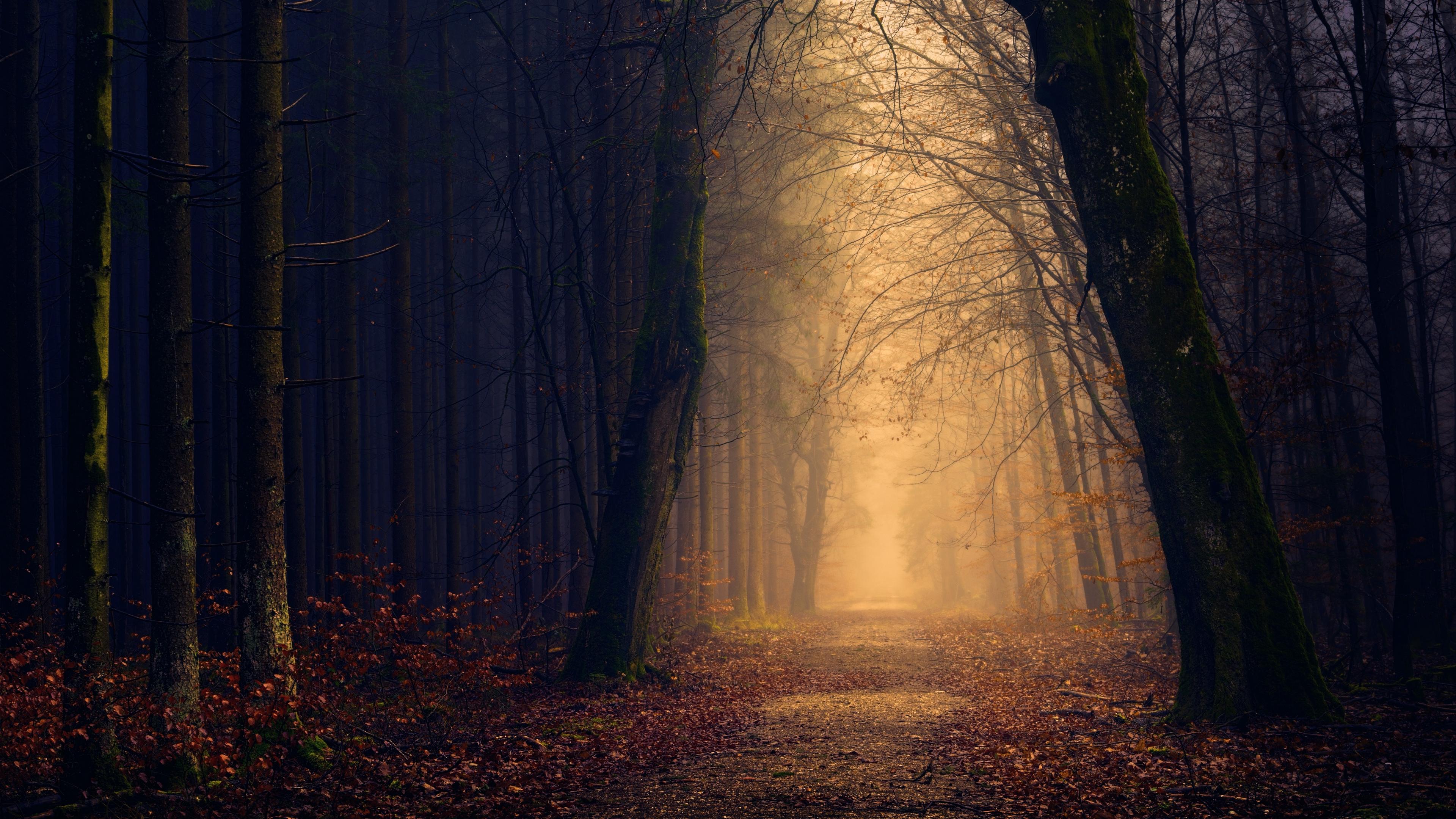 Hình nền 4K thiên nhiên rừng núi