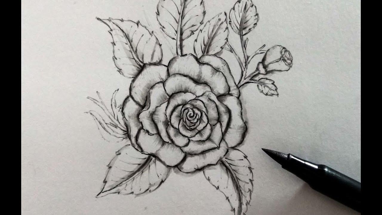 Hình vẽ hoa hồng bằng bút chì ảnh đẹp nhất