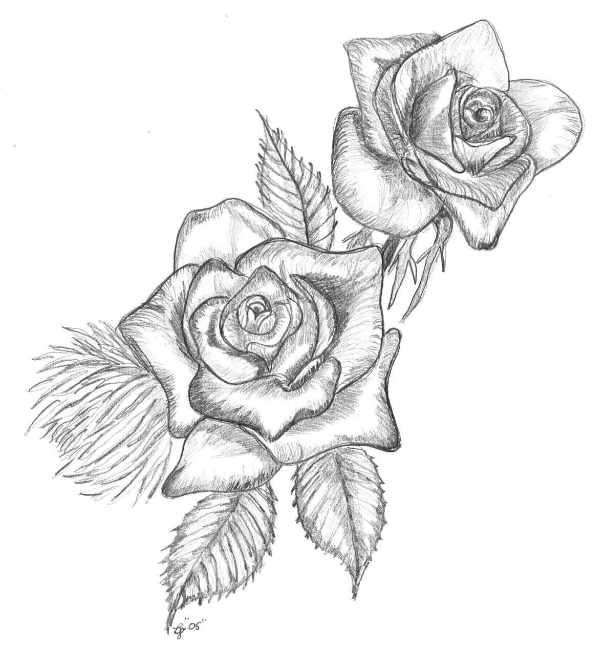 Hoa hồng được vẽ bằng bút chì hình ảnh đẹp nhất