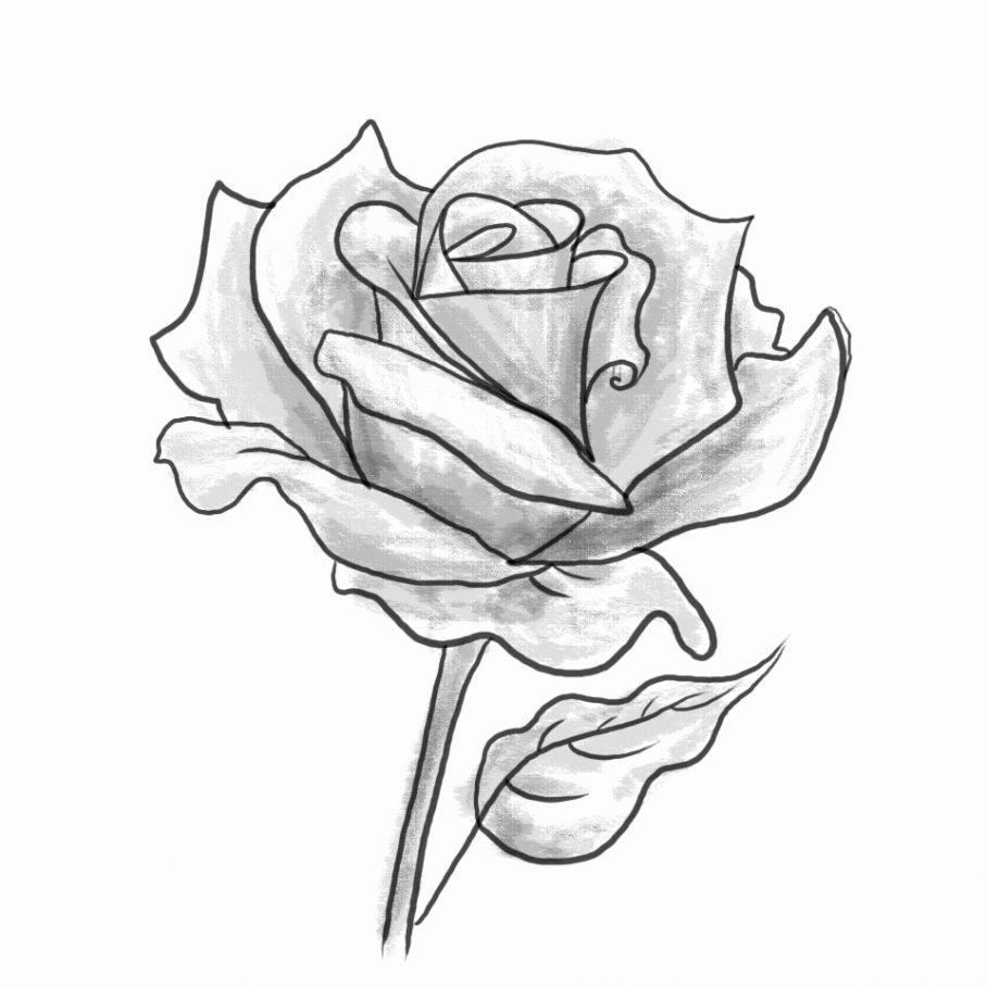 Hoa hồng hình ảnh được vẽ bằng bút chì đẹp nhất